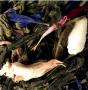 Thé parfumé Pêche verte