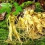 Thé parfumé Aux racines du zen