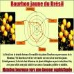 Bourbon Jaune du Brésil