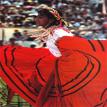 Maragogype liquidambar du Mexique